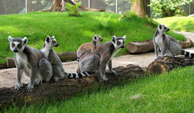 Familienfest im Tierpark Bochum