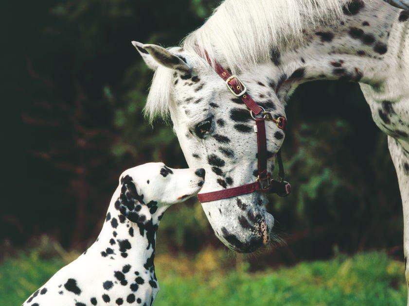 """""""Hund & Pferd"""" mit großem Kinderprogramm"""