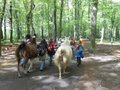 Lama-Park-Wanderung