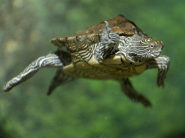 Abenteuer Schildkröte, Sea Life Oberhausen
