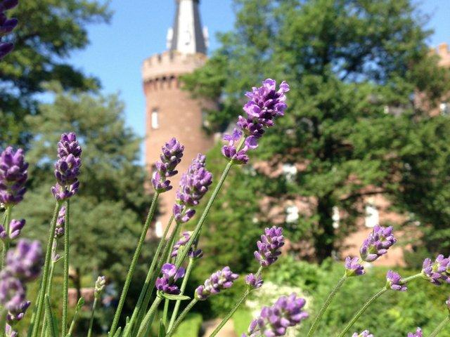 Moyländer Kräutergartenfest, Museum Schloss Moyland