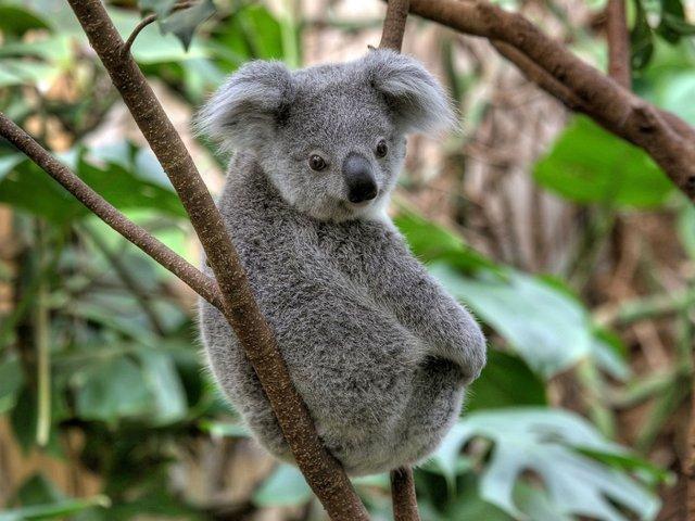Save-the-koala-day, Zoo Duisburg