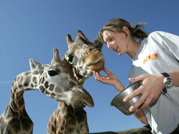 Giraffentag, Zoom Erlebniswelt