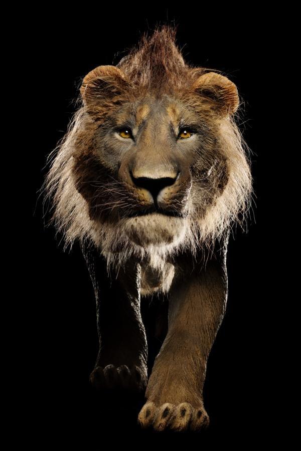 Löwe, Mammut und Co.