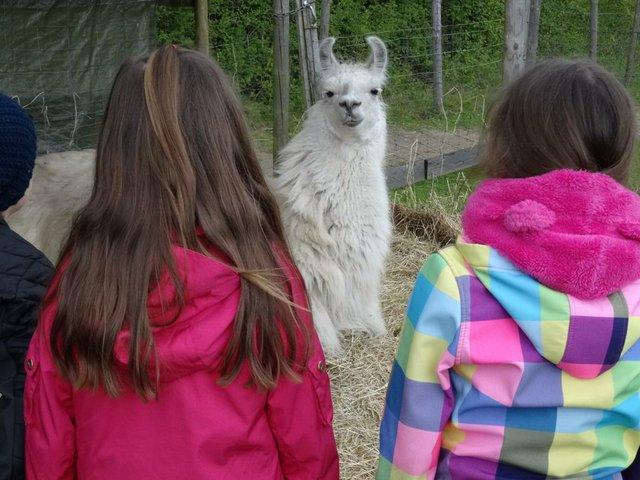 Ein Ferientag mit Lamas