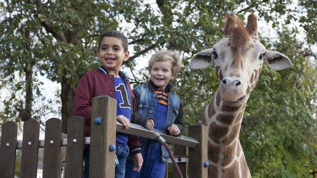 K1024_Filme_HB_Mär18_Giraffe© Victor Arnolds hires.JPG