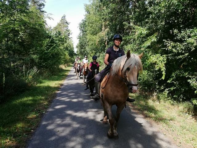 Ponyhof Hagedorn Reiterferien