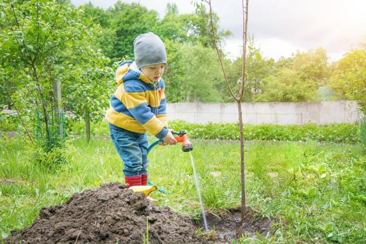 Bäume pflanzen fürs Klima