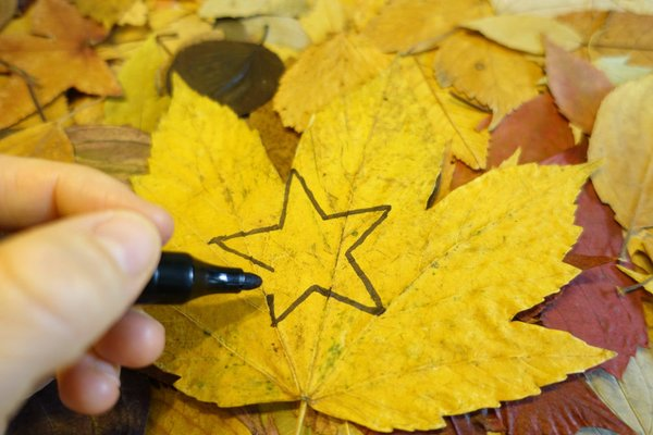 Sterne aus bunten Herbstblättern_Foto PEFC.jpg