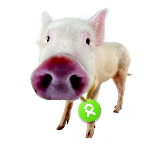 Glücksschwein, Oxfam