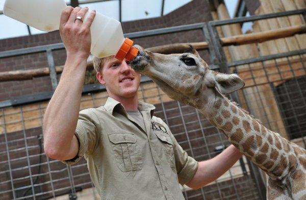 Giraffenbaby im Zoo Dortmund