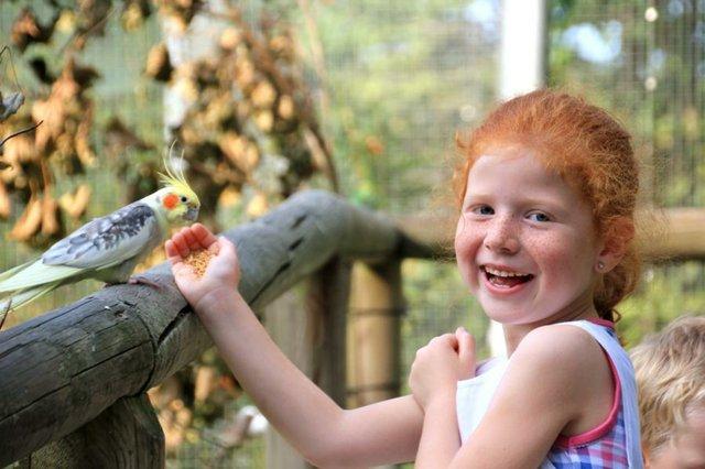 Affen- und Vogelpark Eckernhagen.JPG